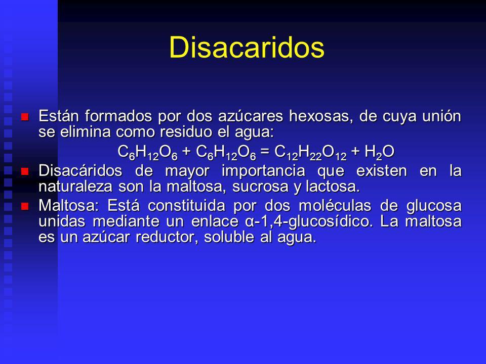 Disacaridos Están formados por dos azúcares hexosas, de cuya unión se elimina como residuo el agua: Están formados por dos azúcares hexosas, de cuya unión se elimina como residuo el agua: C 6 H 12 O 6 + C 6 H 12 O 6 = C 12 H 22 O 12 + H 2 O Disacáridos de mayor importancia que existen en la naturaleza son la maltosa, sucrosa y lactosa.