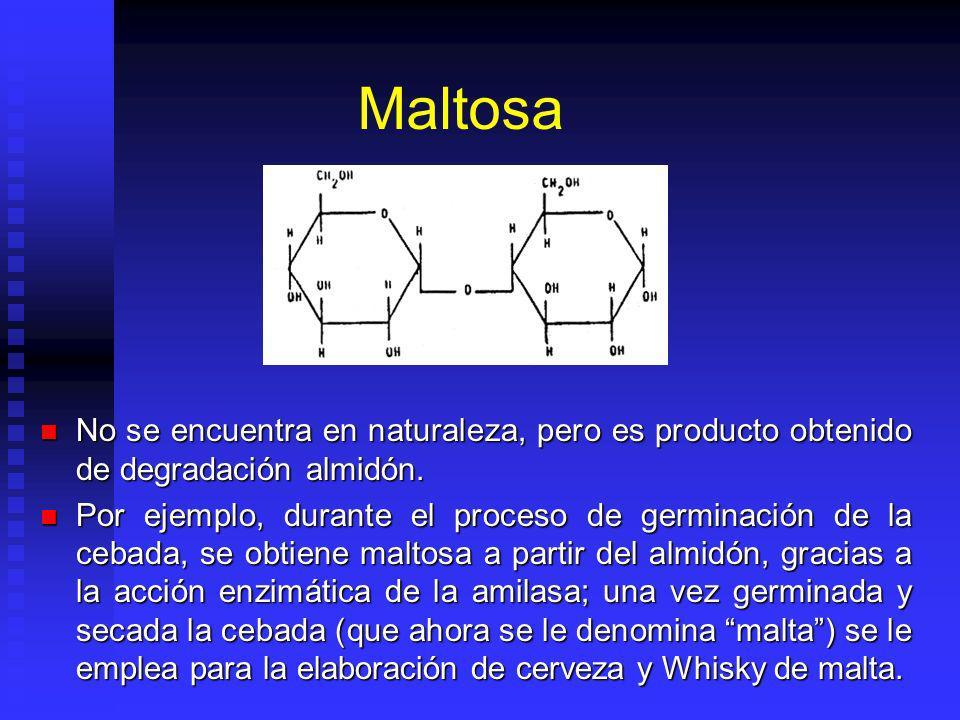 Maltosa No se encuentra en naturaleza, pero es producto obtenido de degradación almidón. No se encuentra en naturaleza, pero es producto obtenido de d