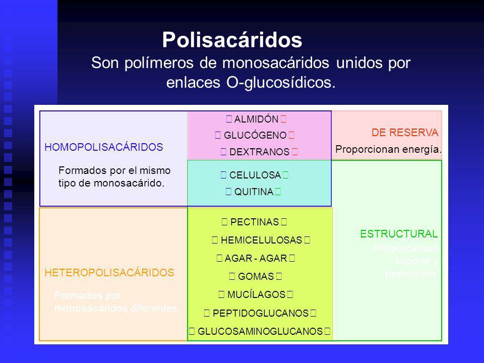 Son polímeros de monosacáridos unidos por enlaces O-glucosídicos. HOMOPOLISACÁRIDOS HETEROPOLISACÁRIDOS ESTRUCTURAL DE RESERVA CELULOSA QUITINA PECTIN