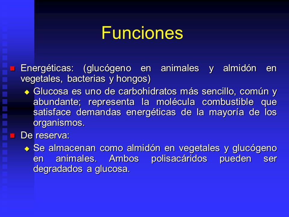 Funciones Energéticas: (glucógeno en animales y almidón en vegetales, bacterias y hongos) Energéticas: (glucógeno en animales y almidón en vegetales, bacterias y hongos) Glucosa es uno de carbohidratos más sencillo, común y abundante; representa la molécula combustible que satisface demandas energéticas de la mayoría de los organismos.