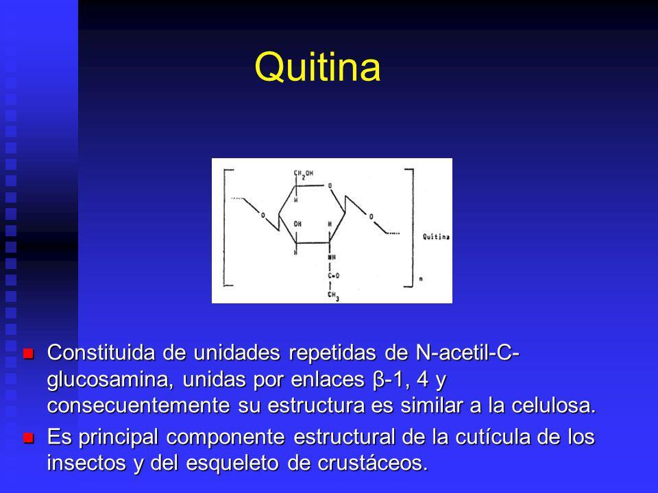 Quitina Constituida de unidades repetidas de N-acetil-C- glucosamina, unidas por enlaces β-1, 4 y consecuentemente su estructura es similar a la celulosa.