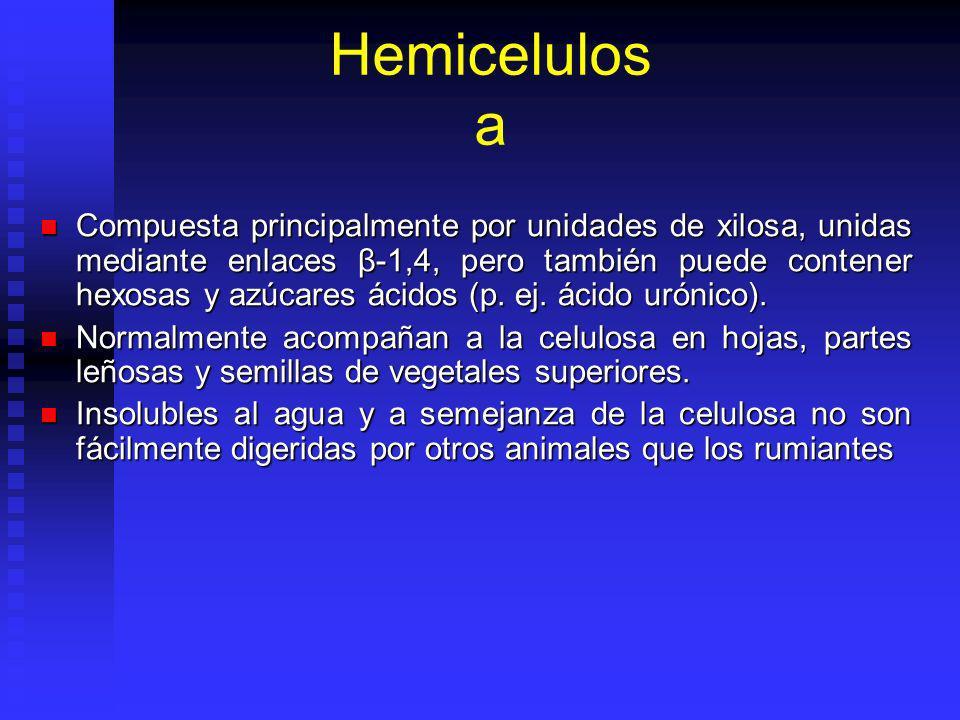 Hemicelulos a Compuesta principalmente por unidades de xilosa, unidas mediante enlaces β-1,4, pero también puede contener hexosas y azúcares ácidos (p