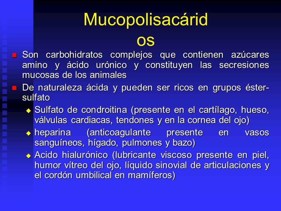 Mucopolisacárid os Son carbohidratos complejos que contienen azúcares amino y ácido urónico y constituyen las secresiones mucosas de los animales Son carbohidratos complejos que contienen azúcares amino y ácido urónico y constituyen las secresiones mucosas de los animales De naturaleza ácida y pueden ser ricos en grupos éster- sulfato De naturaleza ácida y pueden ser ricos en grupos éster- sulfato Sulfato de condroitina (presente en el cartílago, hueso, válvulas cardiacas, tendones y en la cornea del ojo) Sulfato de condroitina (presente en el cartílago, hueso, válvulas cardiacas, tendones y en la cornea del ojo) heparina (anticoagulante presente en vasos sanguíneos, hígado, pulmones y bazo) heparina (anticoagulante presente en vasos sanguíneos, hígado, pulmones y bazo) Acido hialurónico (lubricante viscoso presente en piel, humor vítreo del ojo, líquido sinovial de articulaciones y el cordón umbilical en mamíferos) Acido hialurónico (lubricante viscoso presente en piel, humor vítreo del ojo, líquido sinovial de articulaciones y el cordón umbilical en mamíferos)