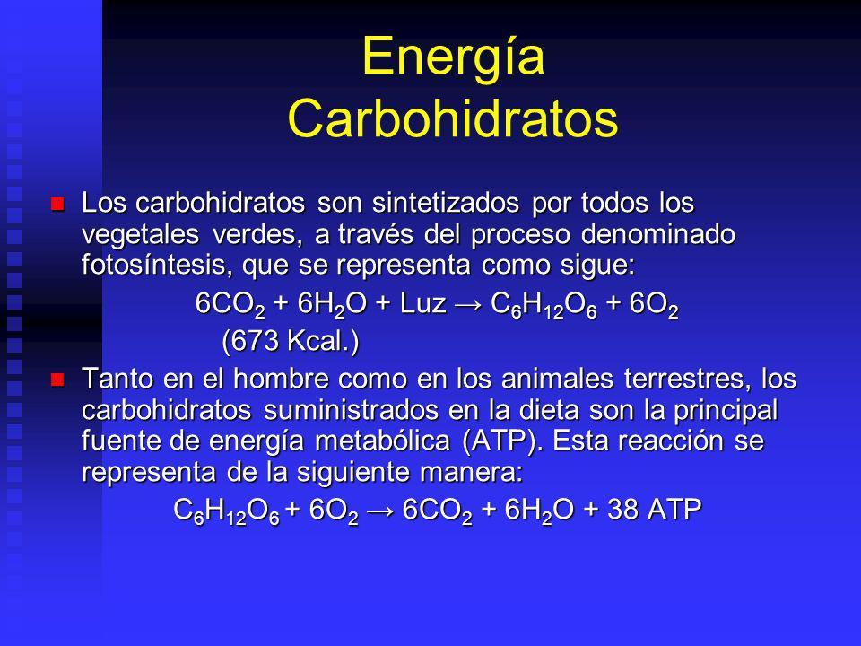 Energía Carbohidratos Los carbohidratos son sintetizados por todos los vegetales verdes, a través del proceso denominado fotosíntesis, que se representa como sigue: Los carbohidratos son sintetizados por todos los vegetales verdes, a través del proceso denominado fotosíntesis, que se representa como sigue: 6CO 2 + 6H 2 O + Luz C 6 H 12 O 6 + 6O 2 (673 Kcal.) Tanto en el hombre como en los animales terrestres, los carbohidratos suministrados en la dieta son la principal fuente de energía metabólica (ATP).