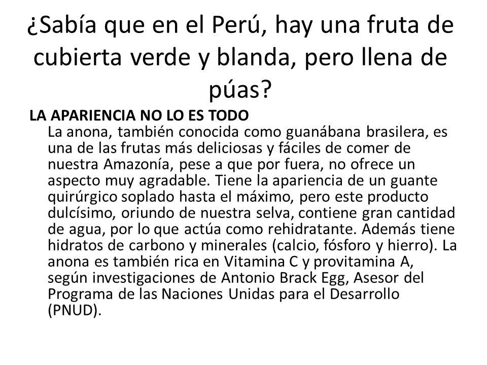 ¿Sabía que en el Perú, hay una fruta de cubierta verde y blanda, pero llena de púas? LA APARIENCIA NO LO ES TODO La anona, también conocida como guaná