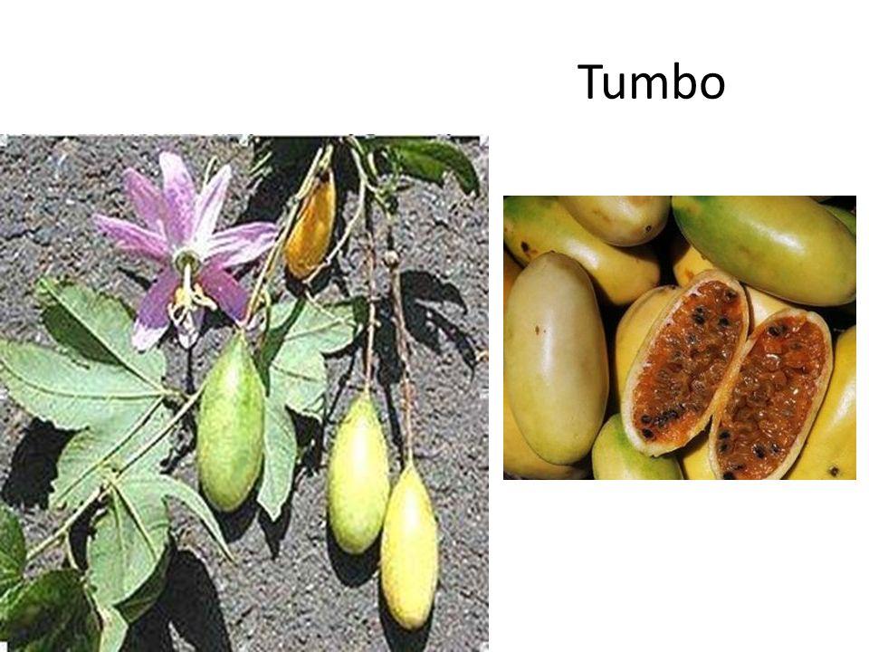 Tumbo