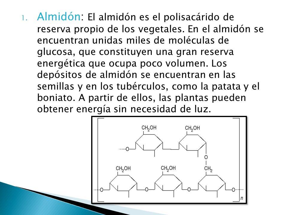 1. Almidón: El almidón es el polisacárido de reserva propio de los vegetales. En el almidón se encuentran unidas miles de moléculas de glucosa, que co