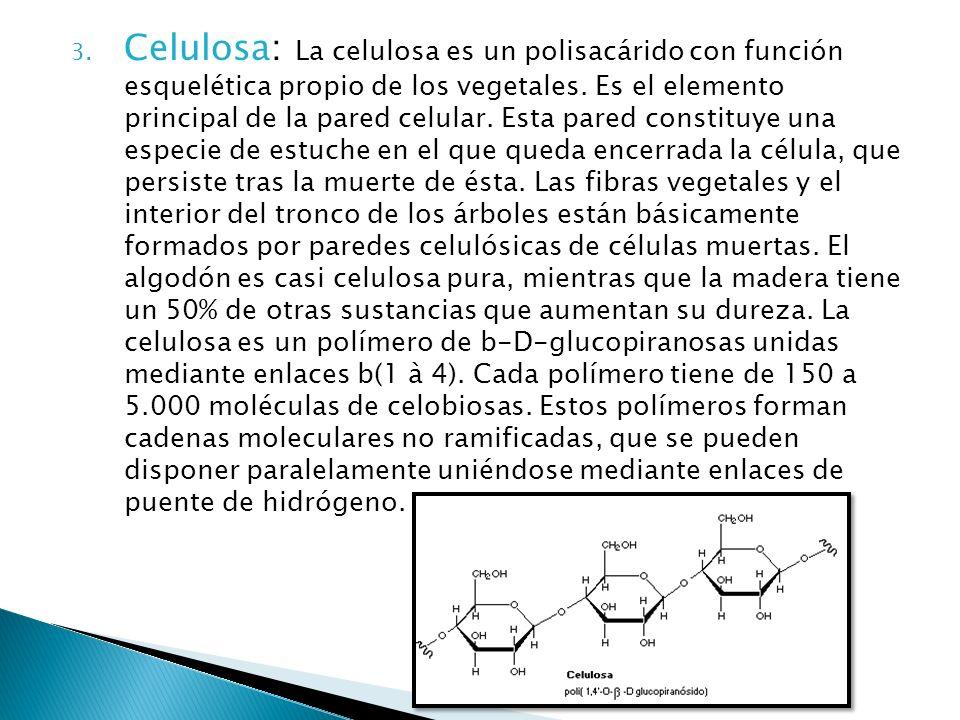 3. Celulosa: La celulosa es un polisacárido con función esquelética propio de los vegetales. Es el elemento principal de la pared celular. Esta pared