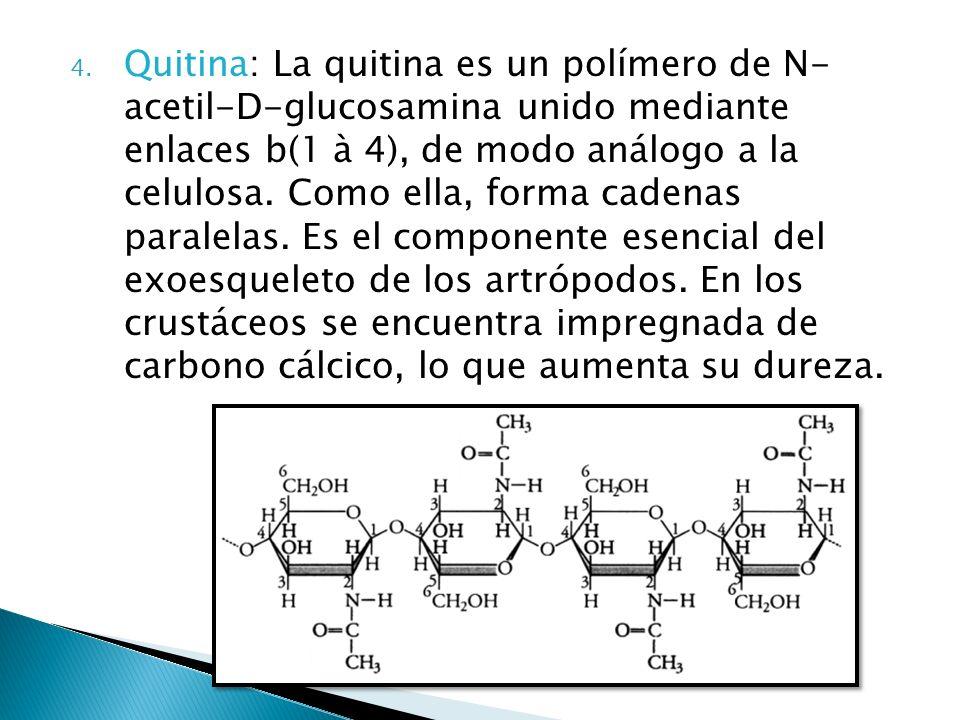 4. Quitina: La quitina es un polímero de N- acetil-D-glucosamina unido mediante enlaces b(1 à 4), de modo análogo a la celulosa. Como ella, forma cade