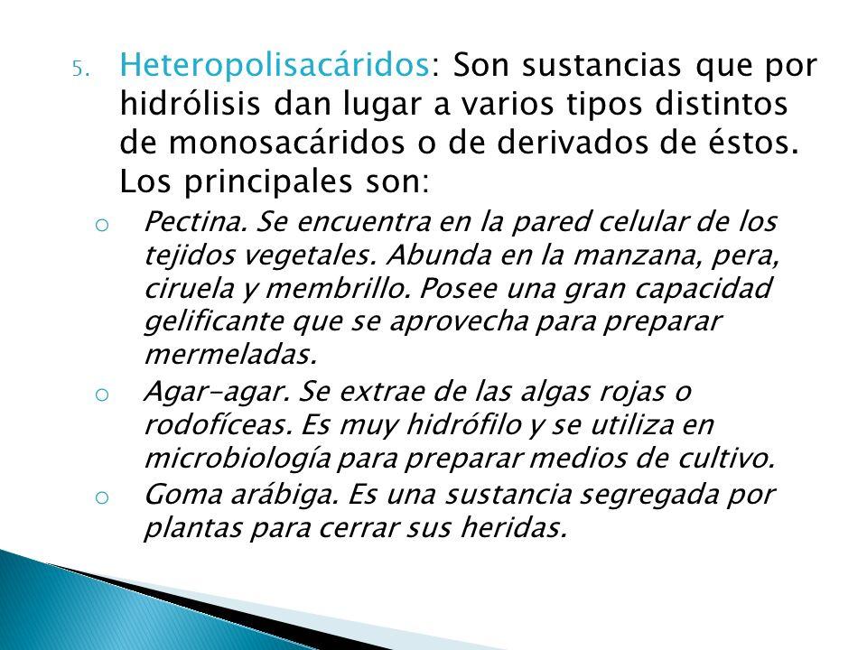 5. Heteropolisacáridos: Son sustancias que por hidrólisis dan lugar a varios tipos distintos de monosacáridos o de derivados de éstos. Los principales