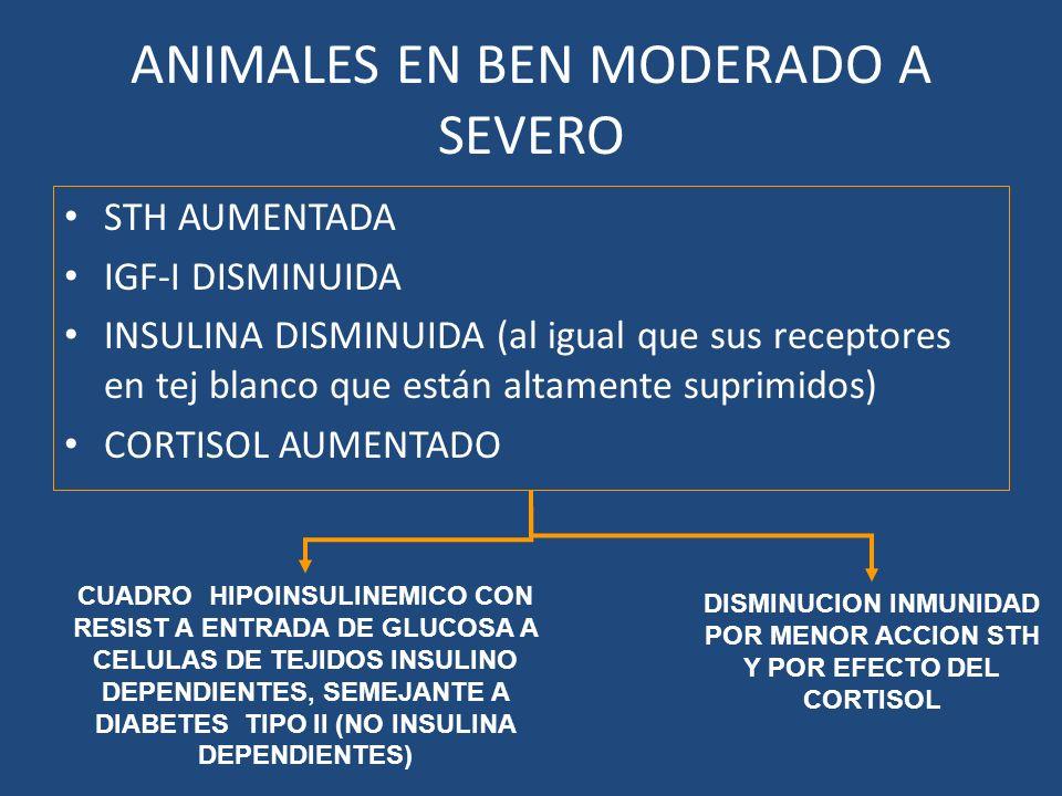 ANIMALES EN BEN MODERADO A SEVERO STH AUMENTADA IGF-I DISMINUIDA INSULINA DISMINUIDA (al igual que sus receptores en tej blanco que están altamente suprimidos) CORTISOL AUMENTADO CUADRO HIPOINSULINEMICO CON RESIST A ENTRADA DE GLUCOSA A CELULAS DE TEJIDOS INSULINO DEPENDIENTES, SEMEJANTE A DIABETES TIPO II (NO INSULINA DEPENDIENTES) DISMINUCION INMUNIDAD POR MENOR ACCION STH Y POR EFECTO DEL CORTISOL