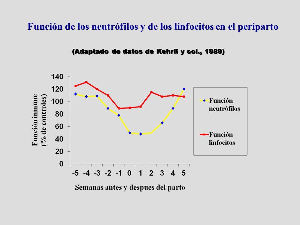 Función de los neutrófilos y de los linfocitos en el periparto (Adaptado de datos de Kehrli y col., 1989)