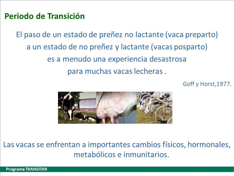 Periodo de Transición Programa TRANSITAR El paso de un estado de preñez no lactante (vaca preparto) a un estado de no preñez y lactante (vacas posparto) es a menudo una experiencia desastrosa para muchas vacas lecheras.
