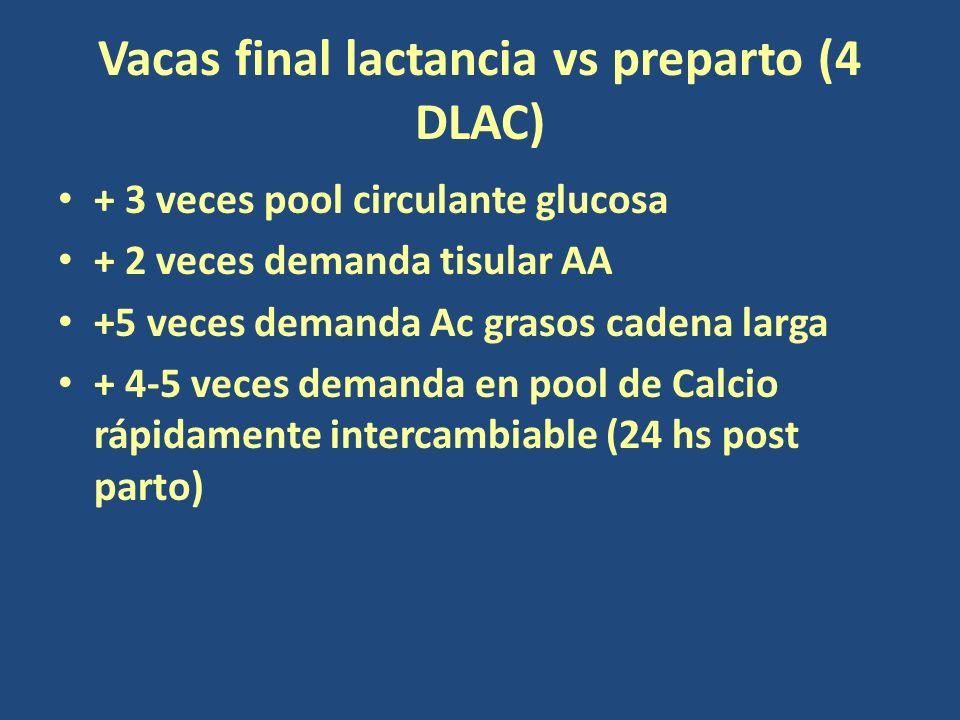 Vacas final lactancia vs preparto (4 DLAC) + 3 veces pool circulante glucosa + 2 veces demanda tisular AA +5 veces demanda Ac grasos cadena larga + 4-5 veces demanda en pool de Calcio rápidamente intercambiable (24 hs post parto)