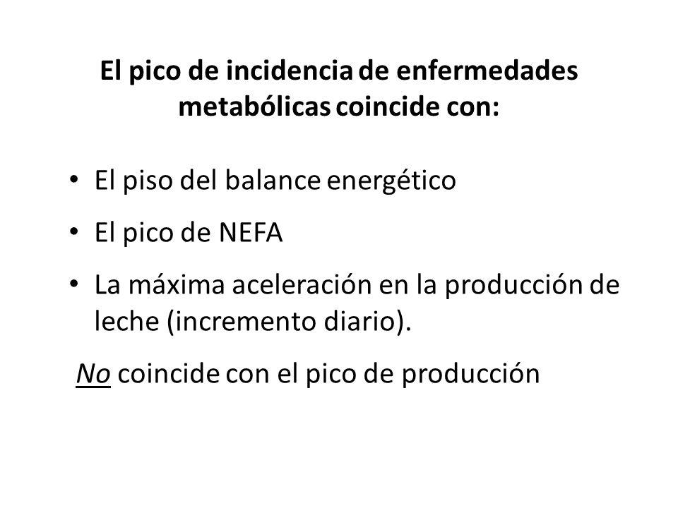 El pico de incidencia de enfermedades metabólicas coincide con: El piso del balance energético El pico de NEFA La máxima aceleración en la producción de leche (incremento diario).