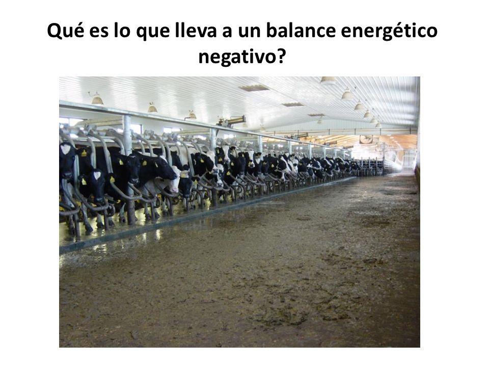 Qué es lo que lleva a un balance energético negativo?