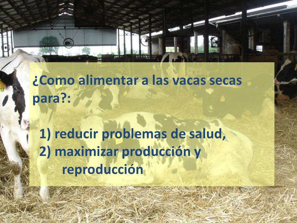 ¿Como alimentar a las vacas secas para?: 1) reducir problemas de salud, 2) maximizar producción y reproducción