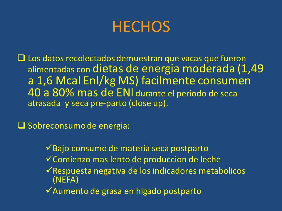 HECHOS Los datos recolectados demuestran que vacas que fueron alimentadas con dietas de energia moderada (1,49 a 1,6 Mcal Enl/kg MS) facilmente consumen 40 a 80% mas de ENl durante el periodo de seca atrasada y seca pre-parto (close up).