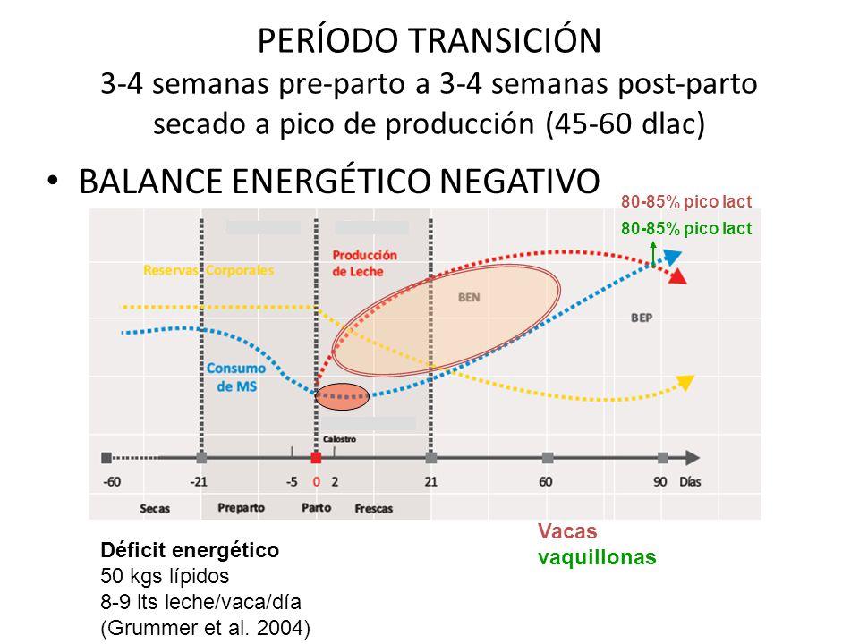 PERÍODO TRANSICIÓN 3-4 semanas pre-parto a 3-4 semanas post-parto secado a pico de producción (45-60 dlac) BALANCE ENERGÉTICO NEGATIVO 80-85% pico lact Déficit energético 50 kgs lípidos 8-9 lts leche/vaca/día (Grummer et al.
