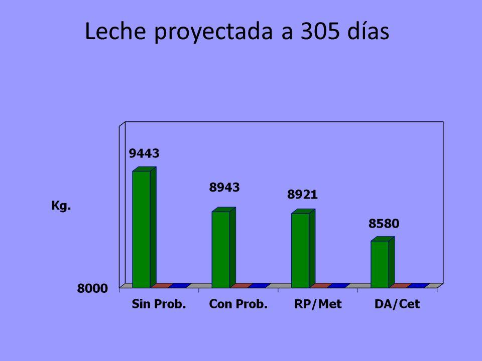 Leche proyectada a 305 días