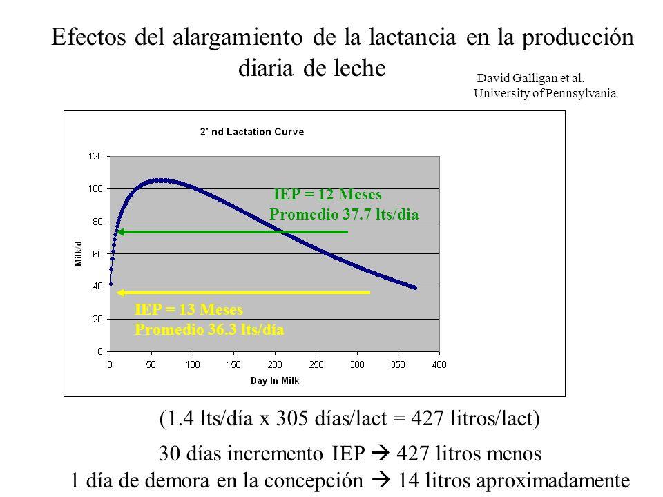 IEP = 12 Meses Promedio 37.7 lts/dia IEP = 13 Meses Promedio 36.3 lts/día Efectos del alargamiento de la lactancia en la producción diaria de leche David Galligan et al.