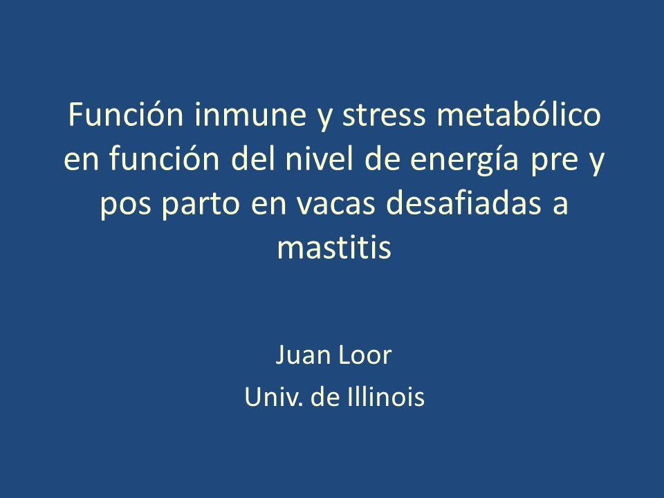 Función inmune y stress metabólico en función del nivel de energía pre y pos parto en vacas desafiadas a mastitis Juan Loor Univ.