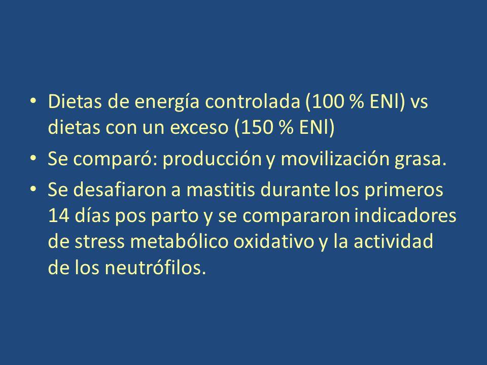 Dietas de energía controlada (100 % ENl) vs dietas con un exceso (150 % ENl) Se comparó: producción y movilización grasa.