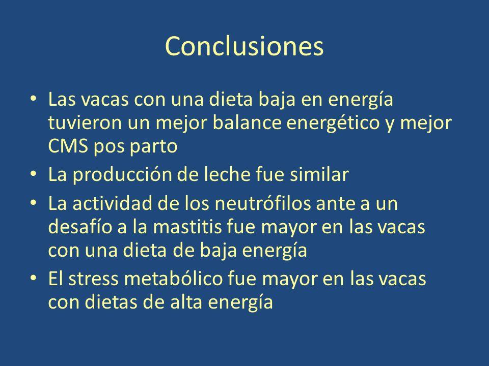 Conclusiones Las vacas con una dieta baja en energía tuvieron un mejor balance energético y mejor CMS pos parto La producción de leche fue similar La actividad de los neutrófilos ante a un desafío a la mastitis fue mayor en las vacas con una dieta de baja energía El stress metabólico fue mayor en las vacas con dietas de alta energía