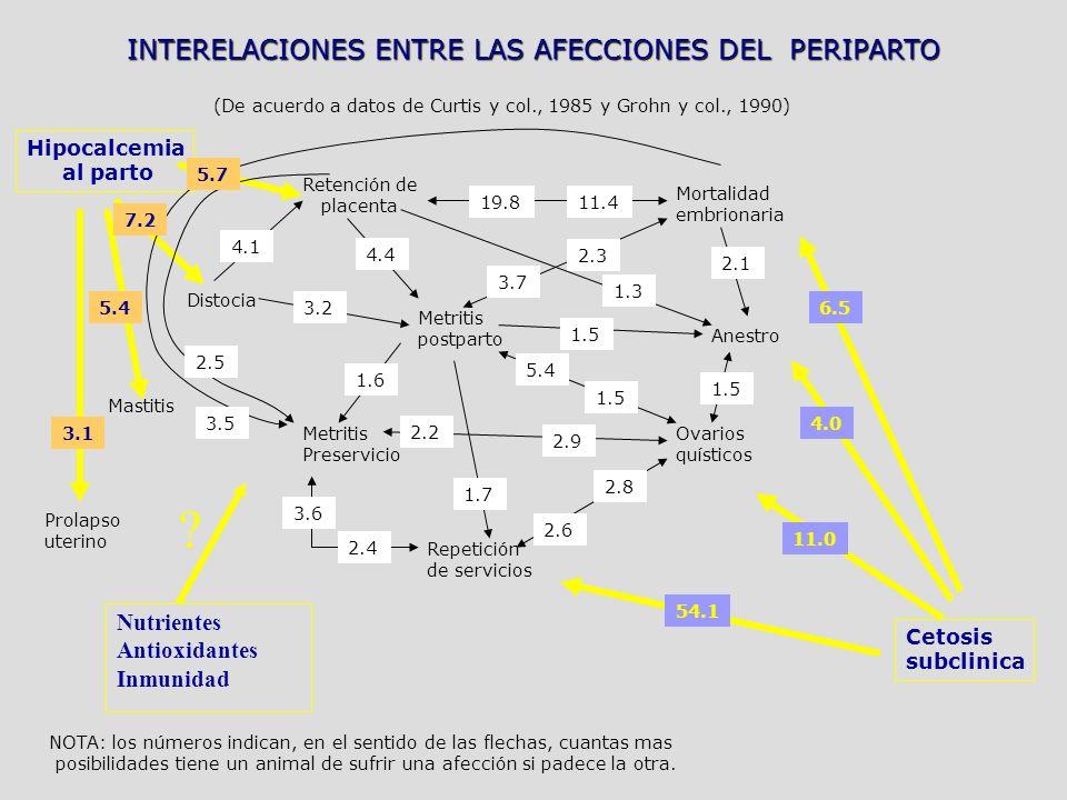 INTERELACIONES ENTRE LAS AFECCIONES DEL PERIPARTO (De acuerdo a datos de Curtis y col., 1985 y Grohn y col., 1990) Hipocalcemia al parto Cetosis subclinica Retención de placenta Mortalidad embrionaria Distocia Metritis postparto Anestro Ovarios quísticos Metritis Preservicio Repetición de servicios Mastitis Prolapso uterino 19.811.4 2.1 1.5 4.4 4.1 3.2 3.7 2.3 1.3 1.6 1.7 3.6 2.4 2.2 2.9 5.4 1.5 2.6 2.8 5.7 7.2 5.4 3.1 4.0 6.5 11.0 54.1 2.5 3.5 NOTA: los números indican, en el sentido de las flechas, cuantas mas posibilidades tiene un animal de sufrir una afección si padece la otra.