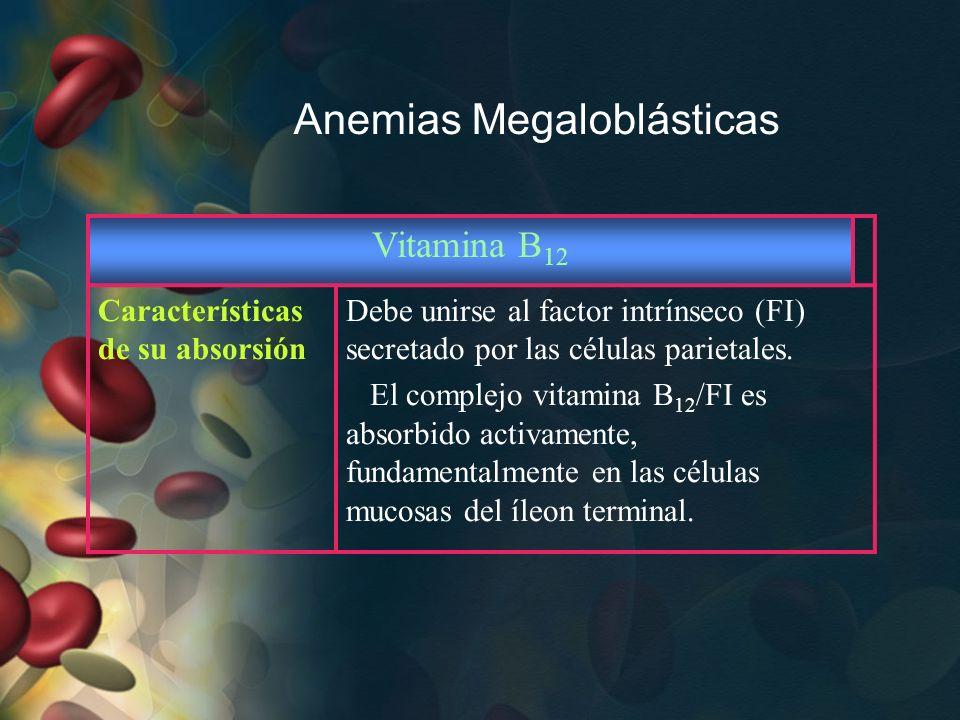 Anemias Megaloblásticas Vitamina B 12 Características de su absorsión Debe unirse al factor intrínseco (FI) secretado por las células parietales. El c