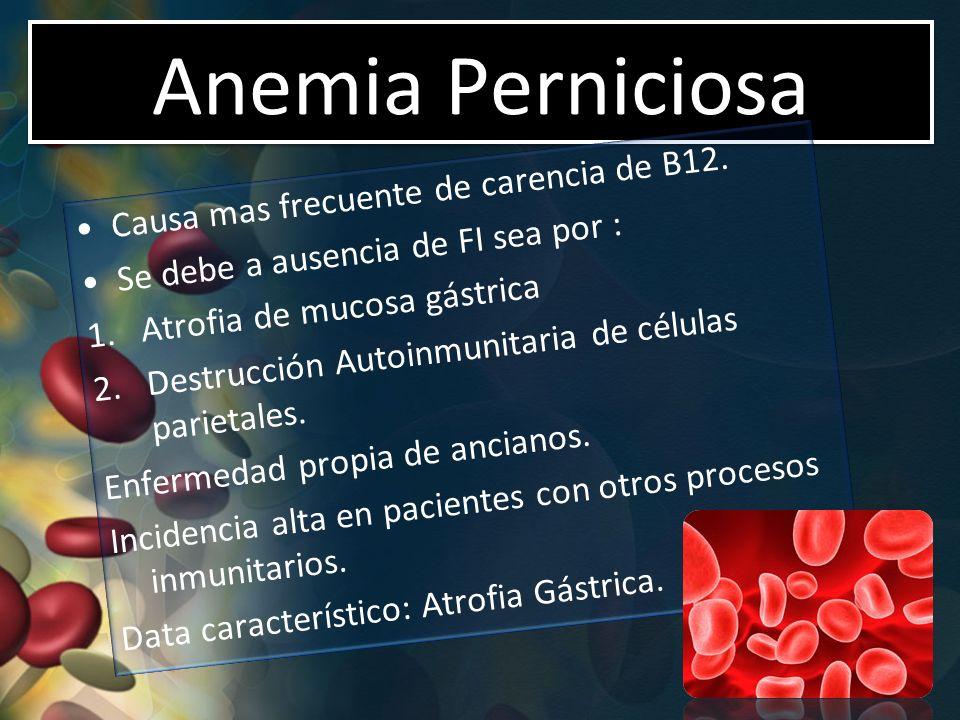 Anemia Perniciosa Causa mas frecuente de carencia de B12. Se debe a ausencia de FI sea por : 1.Atrofia de mucosa gástrica 2.Destrucción Autoinmunitari