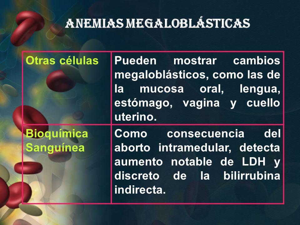 Anemias Megaloblásticas Otras célulasPueden mostrar cambios megaloblásticos, como las de la mucosa oral, lengua, estómago, vagina y cuello uterino. Bi