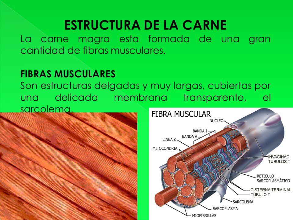 ESTRUCTURA DE LA CARNE La carne magra esta formada de una gran cantidad de fibras musculares.