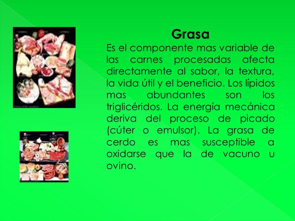 Grasa Es el componente mas variable de las carnes procesadas afecta directamente al sabor, la textura, la vida útil y el beneficio.