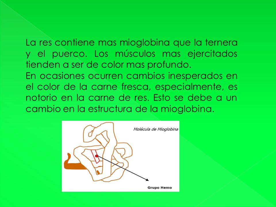 La res contiene mas mioglobina que la ternera y el puerco.