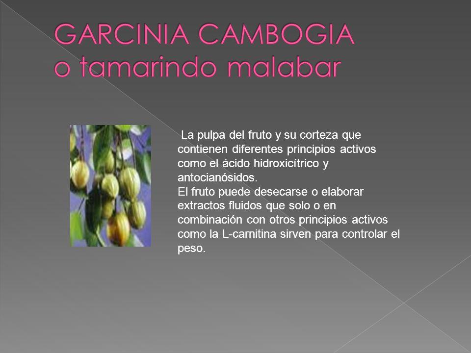 La pulpa del fruto y su corteza que contienen diferentes principios activos como el ácido hidroxicítrico y antocianósidos. El fruto puede desecarse o
