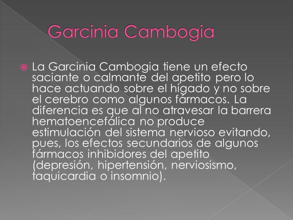 La Garcinia Cambogia tiene un efecto saciante o calmante del apetito pero lo hace actuando sobre el hígado y no sobre el cerebro como algunos fármacos