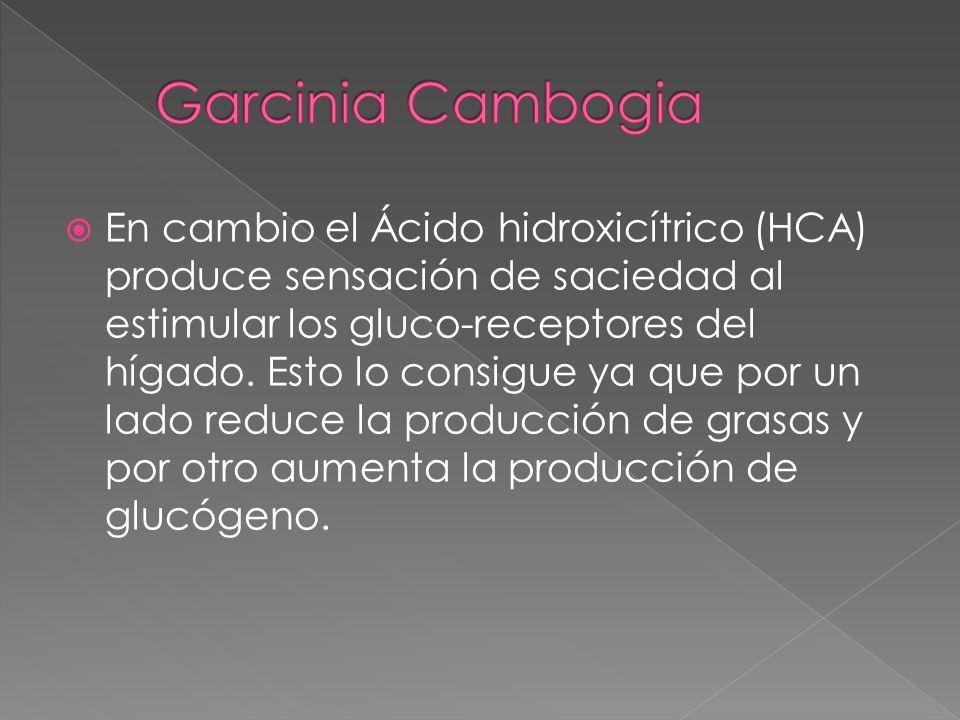 En cambio el Ácido hidroxicítrico (HCA) produce sensación de saciedad al estimular los gluco-receptores del hígado. Esto lo consigue ya que por un lad