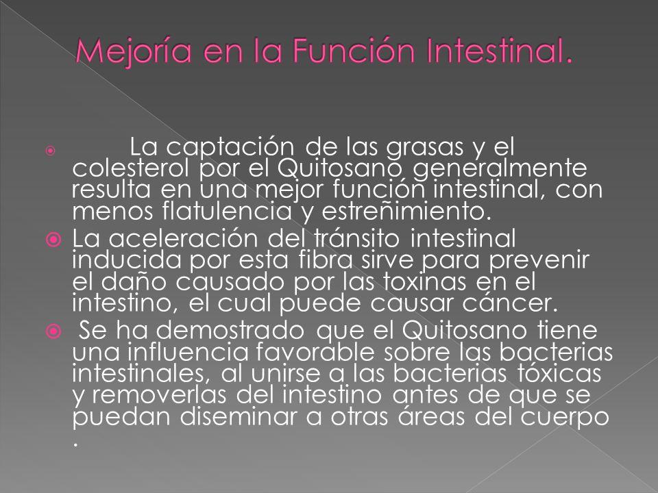 La captación de las grasas y el colesterol por el Quitosano generalmente resulta en una mejor función intestinal, con menos flatulencia y estreñimient