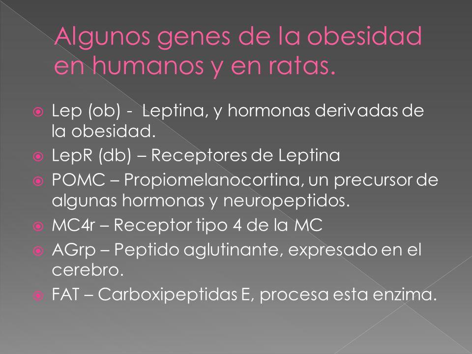 Los triglicéridos de Cadena Media (MCT) son grasas o lípidos, cuya ventaja radica en su rapidez de metabolización.