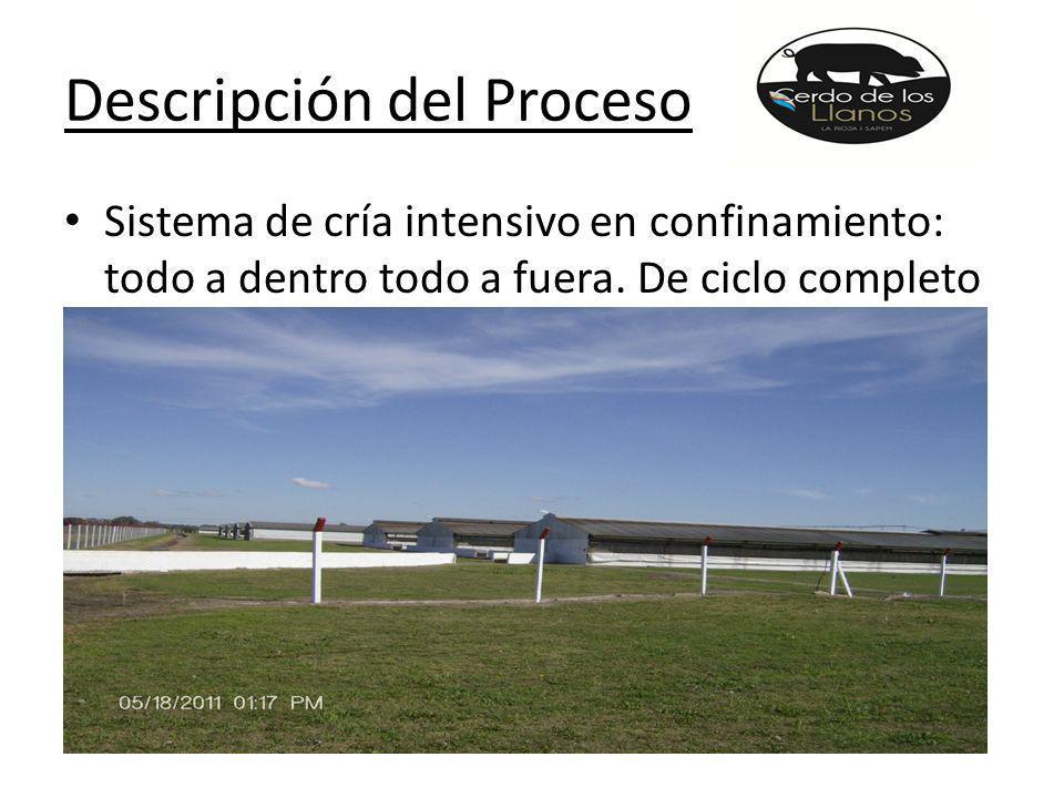 Descripción del Proceso Sistema de cría intensivo en confinamiento: todo a dentro todo a fuera.
