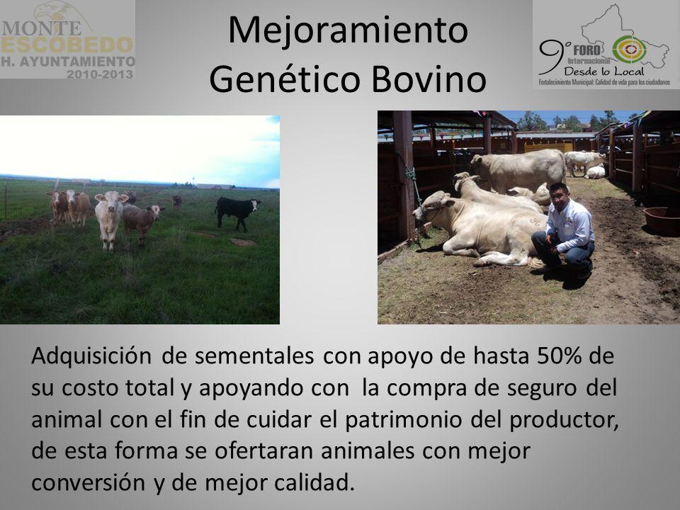 Mejoramiento Genético Bovino Adquisición de sementales con apoyo de hasta 50% de su costo total y apoyando con la compra de seguro del animal con el fin de cuidar el patrimonio del productor, de esta forma se ofertaran animales con mejor conversión y de mejor calidad.