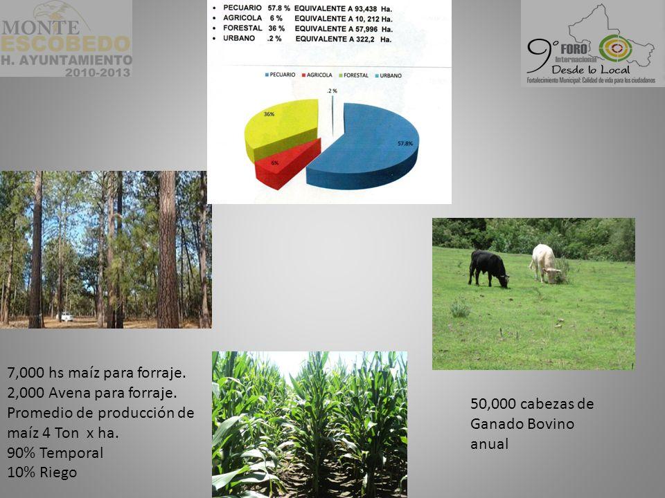 50,000 cabezas de Ganado Bovino anual 7,000 hs maíz para forraje.