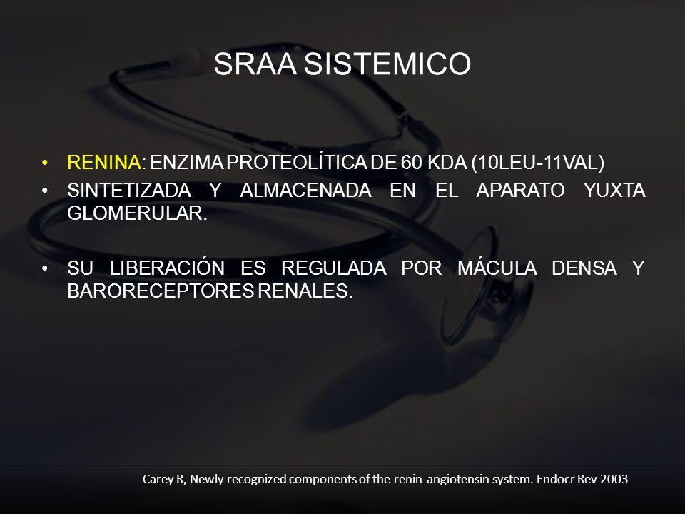 SRAA SISTEMICO RENINA: ENZIMA PROTEOLÍTICA DE 60 KDA (10LEU-11VAL) SINTETIZADA Y ALMACENADA EN EL APARATO YUXTA GLOMERULAR. SU LIBERACIÓN ES REGULADA