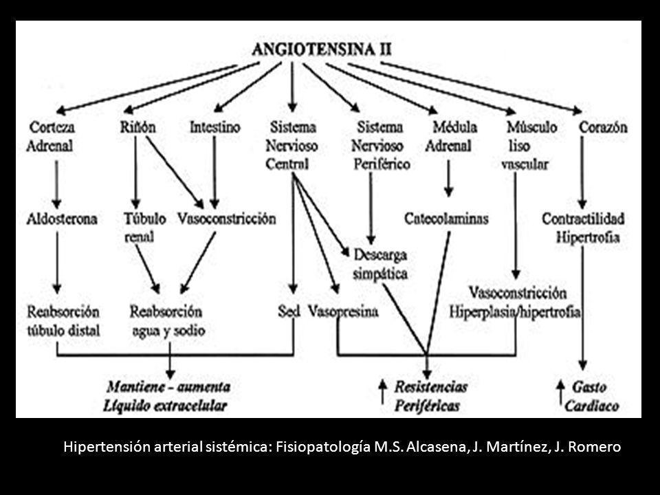 Hipertensión arterial sistémica: Fisiopatología M.S. Alcasena, J. Martínez, J. Romero