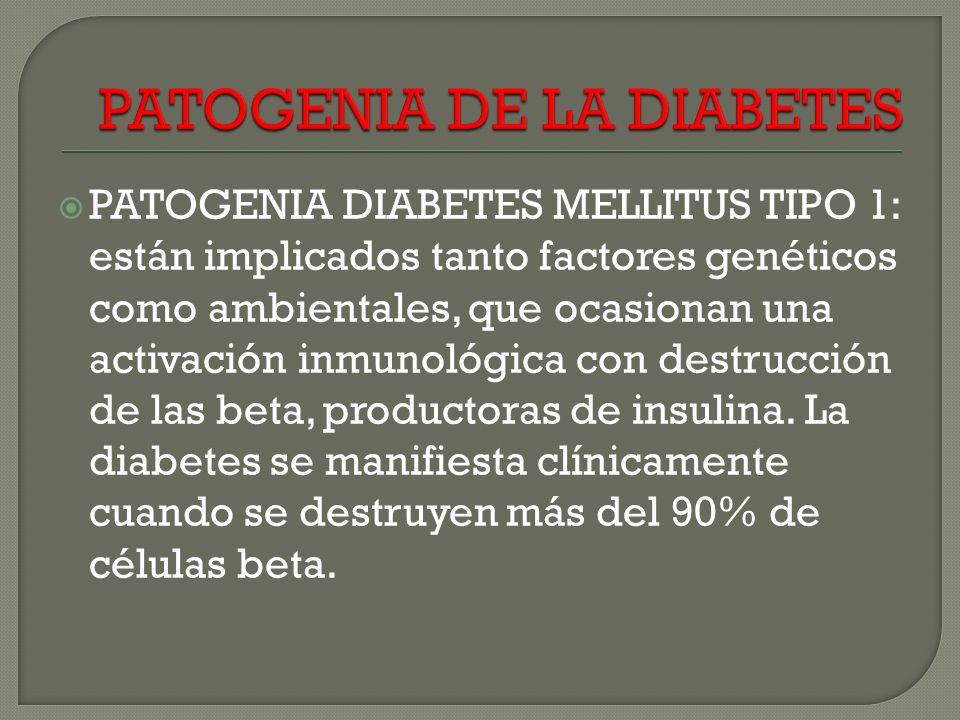 PATOGENIA DIABETES MELLITUS TIPO 1: están implicados tanto factores genéticos como ambientales, que ocasionan una activación inmunológica con destrucción de las beta, productoras de insulina.