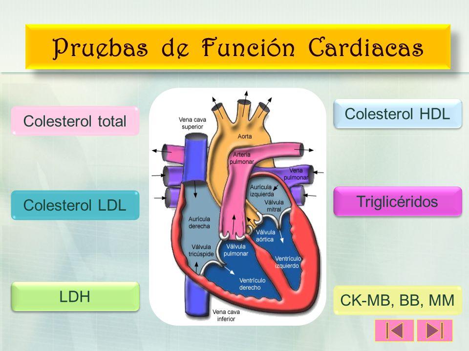 Pruebas de Función Cardiacas Colesterol HDL LDH Triglicéridos Colesterol LDL CK-MB, BB, MM Colesterol total