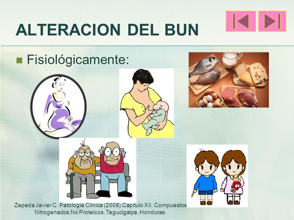 ALTERACION DEL BUN Fisiológicamente: Zepeda Javier C. Patologia Clinica (2008).Capitulo XII. Compuestos Nitrogenados No Proteicos. Tegucigalpa. Hondur