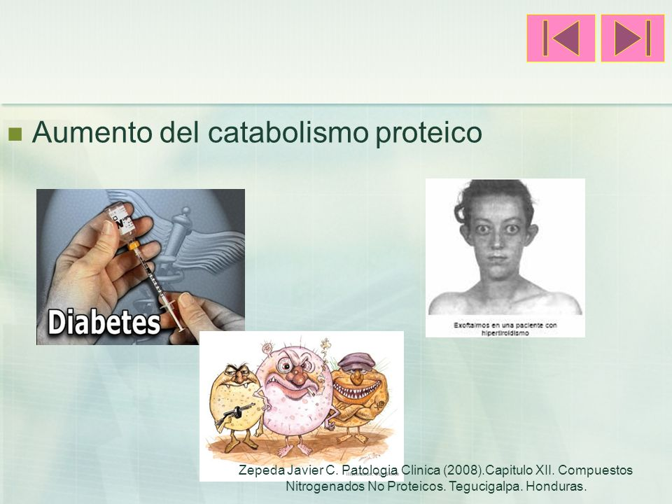 Aumento del catabolismo proteico Zepeda Javier C. Patologia Clinica (2008).Capitulo XII. Compuestos Nitrogenados No Proteicos. Tegucigalpa. Honduras.