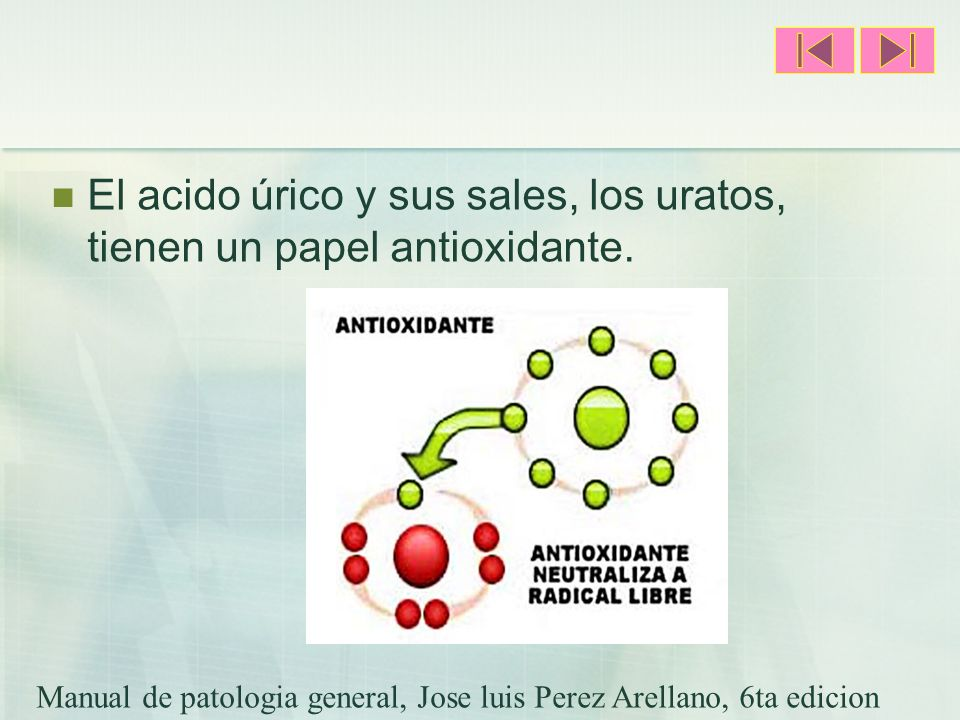 El acido úrico y sus sales, los uratos, tienen un papel antioxidante. Manual de patologia general, Jose luis Perez Arellano, 6ta edicion